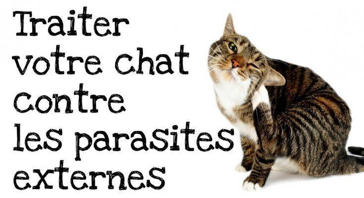 Le Dr Laurence De Meester - de Courcy , vétérinaire, vous explique pourquoi il est important de traiter régulièrement votre chat contre les parasites externes et comment appliquer un traitement anti puce.