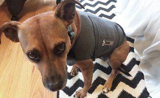 Thunder Jacket for Dogs