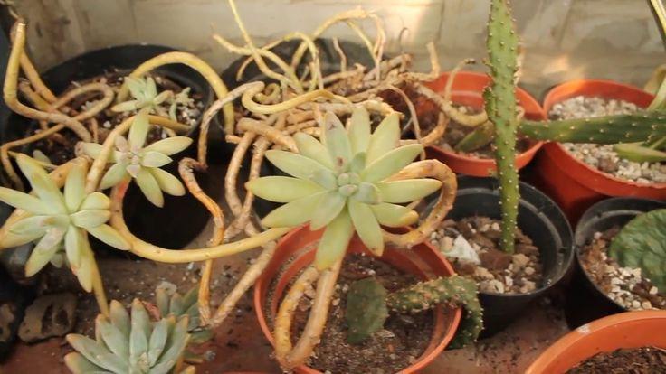 Inverno: le piante grasse all'esterno