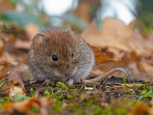 Cute How To Get Rid of Voles