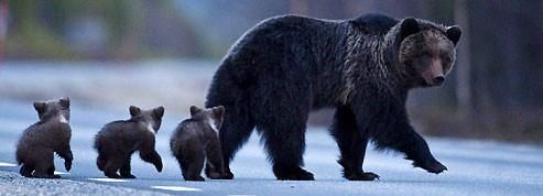 Black Bear Funny Bear Quotes. QuotesGram |Funny Black Bear Family