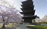 Street View guide to Japan: Cherry Blossom Season Edition