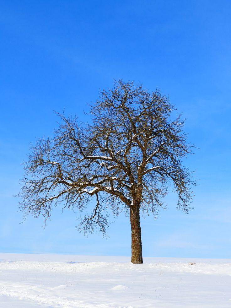 Träd mot blå himmel.