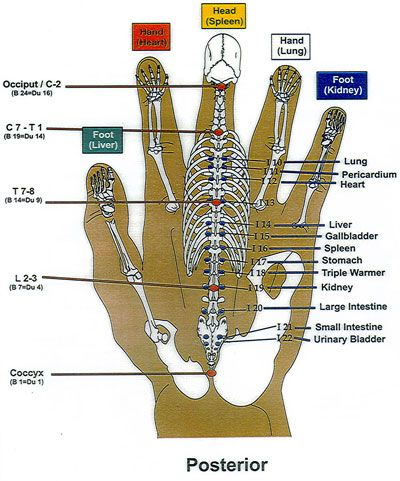 Korean Hand Reflexology chart 2. Modern Institute of Reflexology