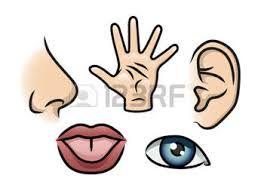 Resultado de imagen para los 5 sentidos en plastilina