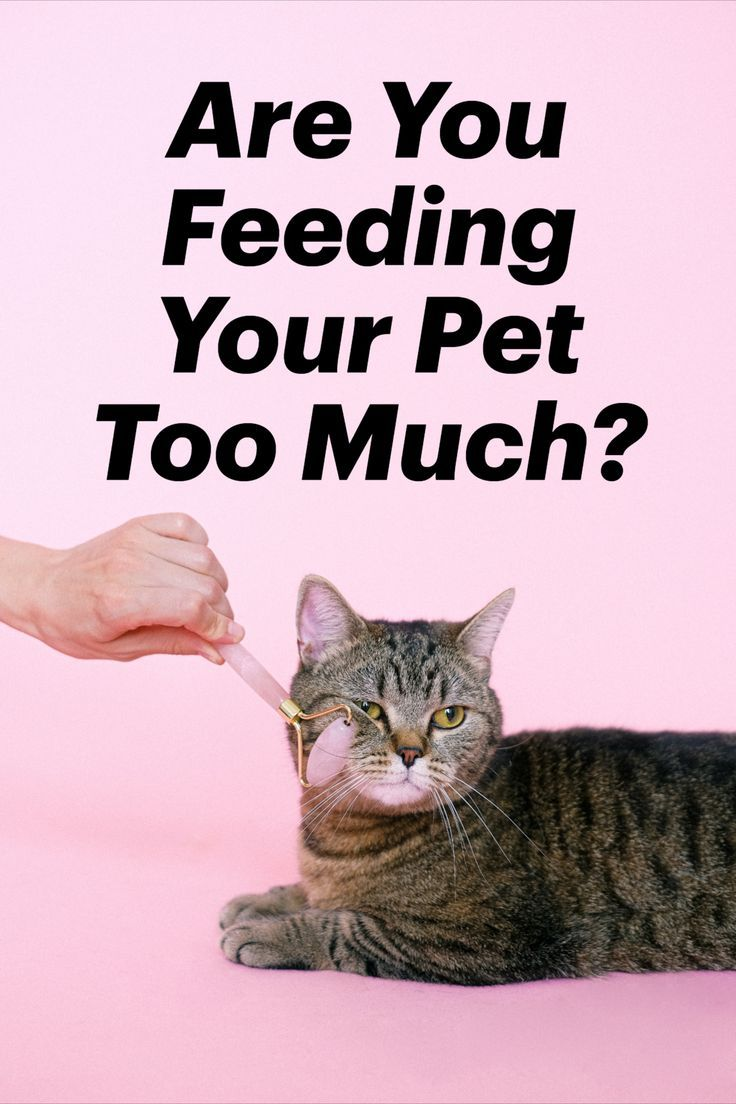 How Much Should You Feed A Dog Cat Or Pet In 2020 Your Pet Cat Allergies Pets