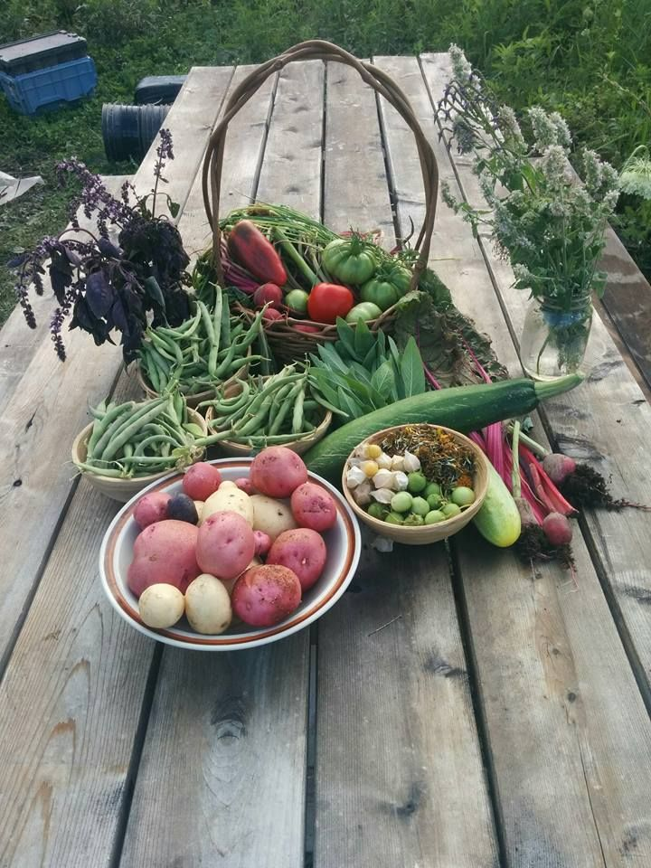 Thank you mother Gaia for this fresh Organic Food on Valhalla Land!   #organic #Urbangarden #gardening #harvest #healthyfood #permaculture #urbanfarm #ecovillage #valhallamovement #community #montreal