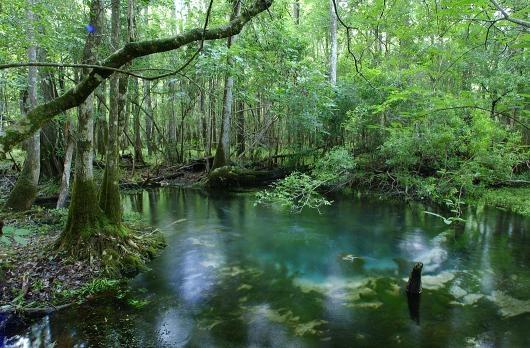 Florida Springs, Springs in Florida, Florida Cave Diving, Manatee Viewing - Florida's Springs: Protecting Nature's Gems - Florida DEP - ePostcards