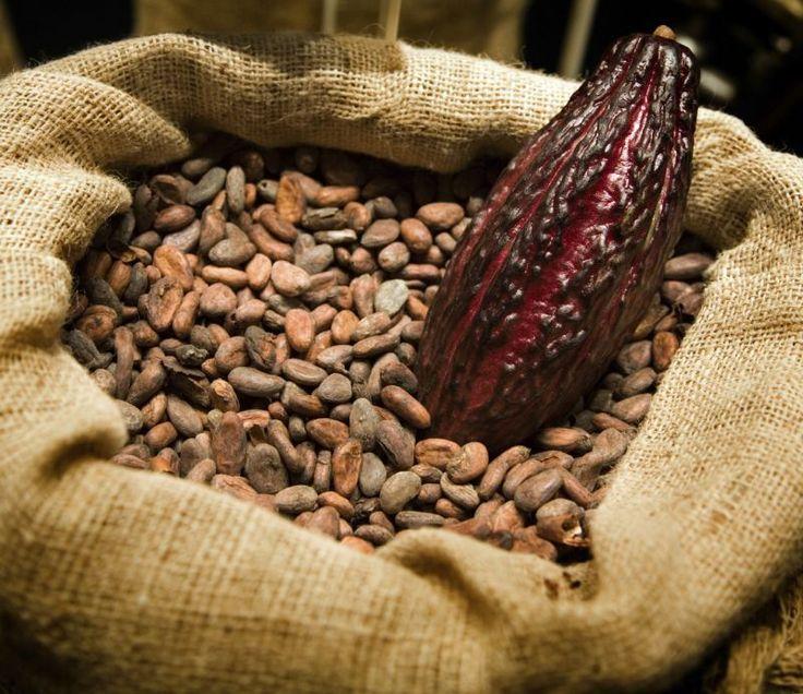 Video storia del cacao