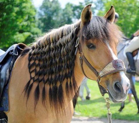 Voici 24 animaux qui ont une coiffure extravagante.. Ils vont vous rendre jaloux! - Trop Cute et mignon