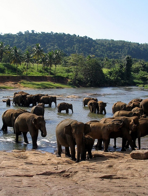 Pinnawela Elephant Orphanage in Sri Lanka by PseudoRandom, via Flickr