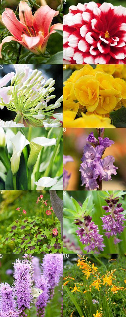Top 10 summer bulbs | Top 10 zomerbollen #gardening #bulbs #flowers