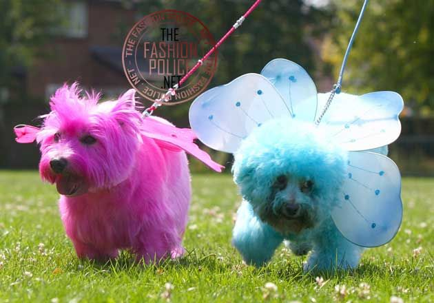 Easter pupsHighlands Terriers, Perros Pintados, Pets Dogs, West Highlands, Pink Westies, Creative Grooms, Blue Pooch, Colors Dogs, Dogs Petsfashion