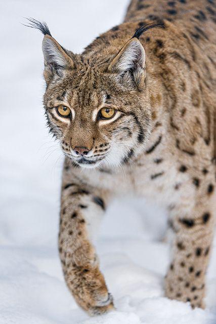 rnes cougars personals {{ metainformationmetadescription() }.