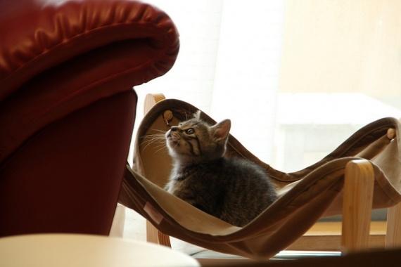 じっっっ・・・・|フェリシモ猫部ギャラリー