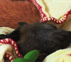 Baby Bat (GIF).