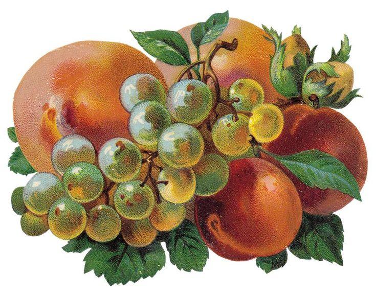 Человечки рисунки, открытки овощей и фруктов