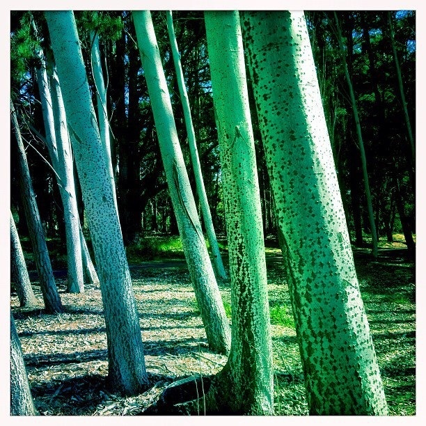 Trees at Yarralumla on Lake Burley Griffin, Canberra ACT Australia