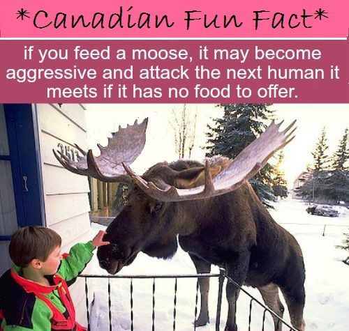 Don't feed the moose