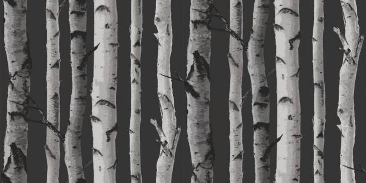 Nordik Wood (31052) - Albany Wallpapers - A simple silver birch tree design with tree trunks giving a stripe effect.  Perfect, for a contemporary  Scandinavian look. Shown in the silver grey and white on charcoal grey.  Please request sample for true colour match.