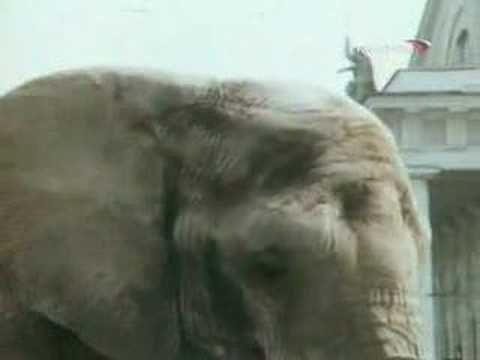 Боба и слон - YouTube
