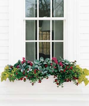What to plant in a flower box on a sunny window