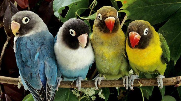 NewPix.ru - Красивые фотографии птиц от профессиональных фотографов