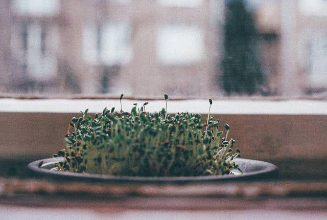 8 TIPOV AKO ZAČAŤ JAR ZDRAVŠIE   JEDZ A MILUJ