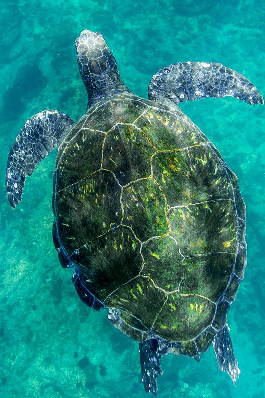 Dance with me sea turtle  byCedric Jacquot