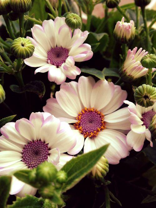 .flor