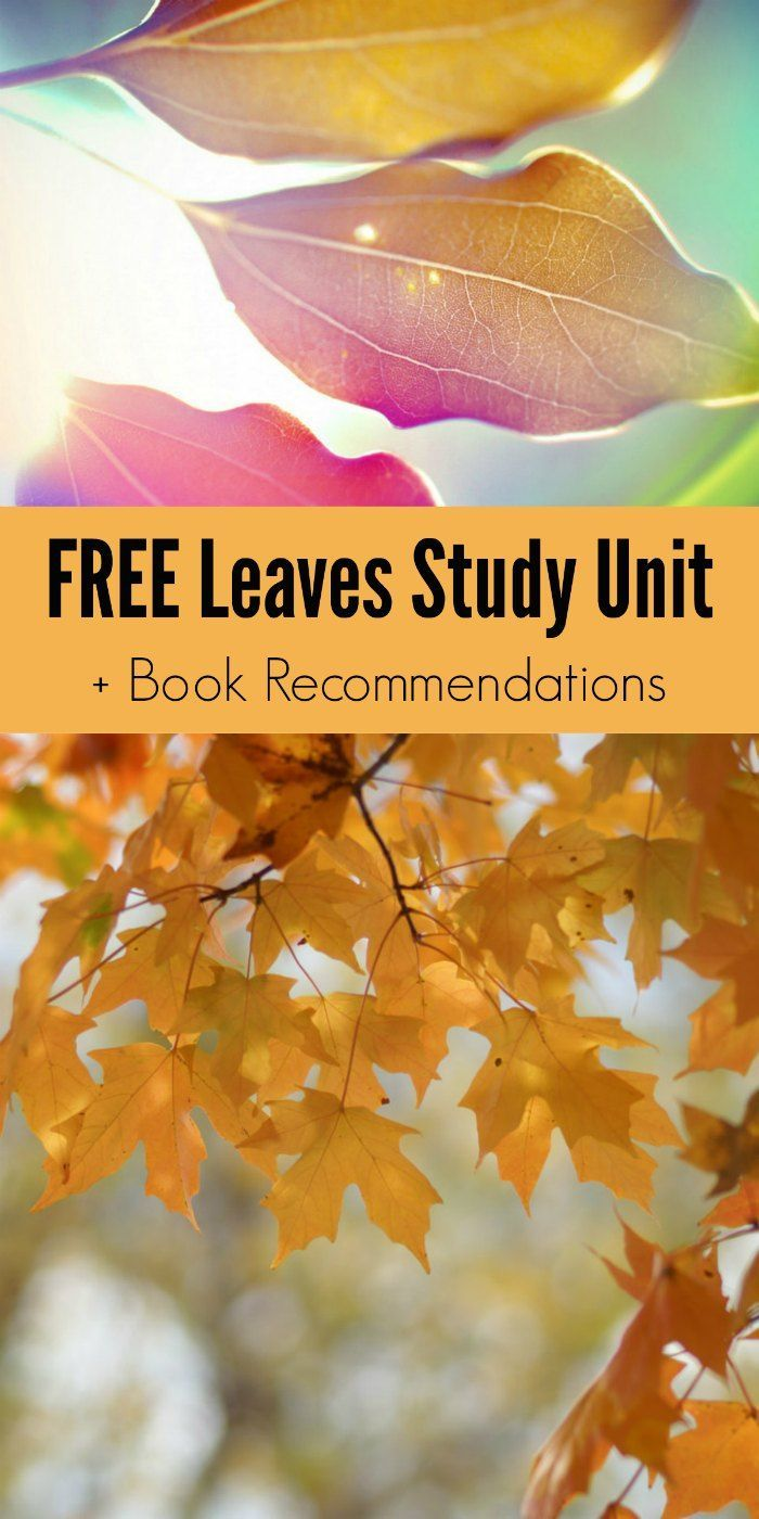 FREE Leaves Study Unit + Fall Leaves Book Recommendations