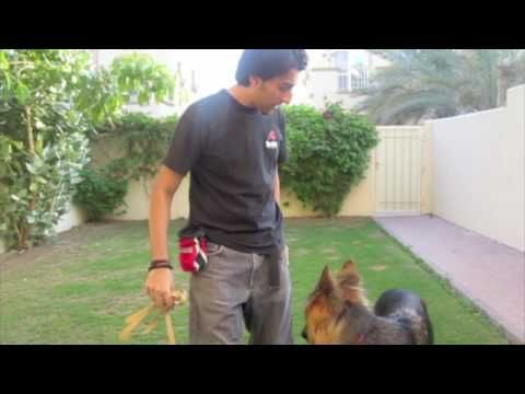 While there are many dogs that pull on walks, any dog can learn to walk calmly on a loose leash if we create a positive learning environment and teach them in the way that their minds understand. Find out how using positive reinforcement you can condition your dog to stay next to you and stop pulling when you take them for a walk.      ****This ...