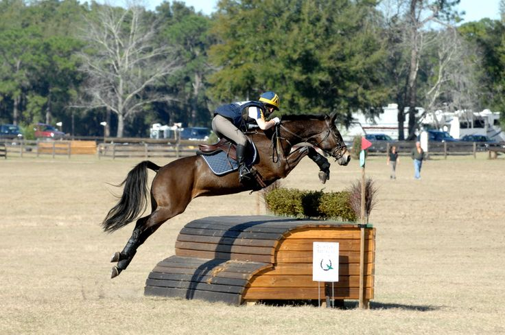 96 Best Images About 3 Day Eventing On Pinterest