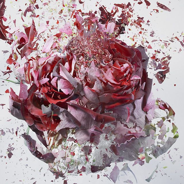 Martin Kimas soaked flowers in liquid nitrogen, then shot them from behind with air gun, and took the photo. via Ed Jonghigh speed flowers