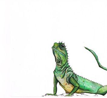 Curious Lizard Pen and Ink - Kate Morgan - Artist & Illustrator
