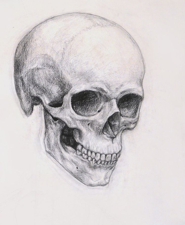 A beautiful skull sketch.                                                                                                                                                                                 Más