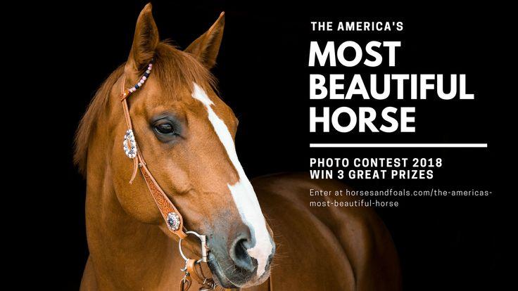 DAS SCHÖNSTE PFERD AMERIKAS 2018 Wenn Sie an unserem Fotowettbewerb teilnehmen, …   – Horse Breeds