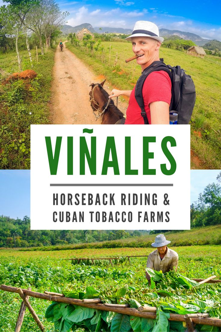 Riding through endless fields of green tobacco and fertile red soil in Viñales, we passed local farmers harvesting the leaves that would become Cuba's world famous cigars.