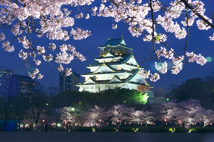 西の丸庭園は、昭和40年に北政所の屋敷があったとされる場所に芝生庭園として開園しました。開花期間は観桜ナイターが開催され、300本のサクラが咲き競う夜桜の名所となっています。