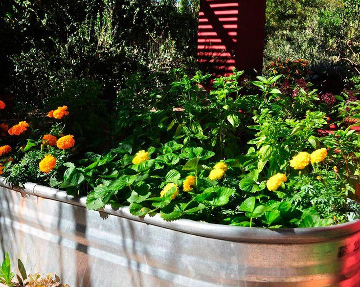 17 Best images about Vegetable Garden Ideas on Pinterest