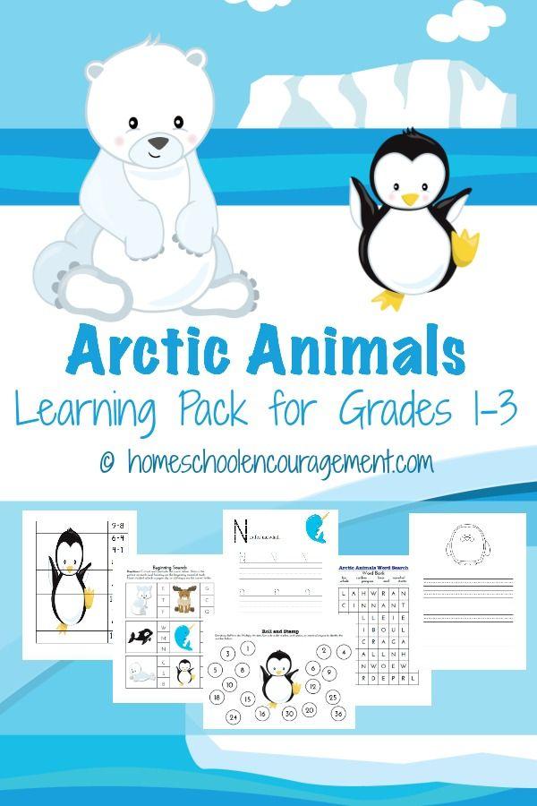 1000 ideas about arctic animals on pinterest about penguins preschool and kindergarten. Black Bedroom Furniture Sets. Home Design Ideas