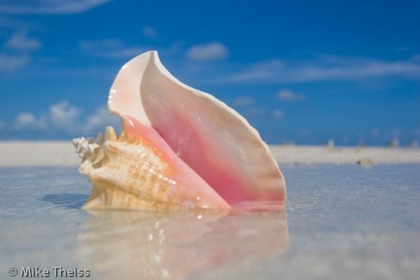 how to make a horn out of a conch shell