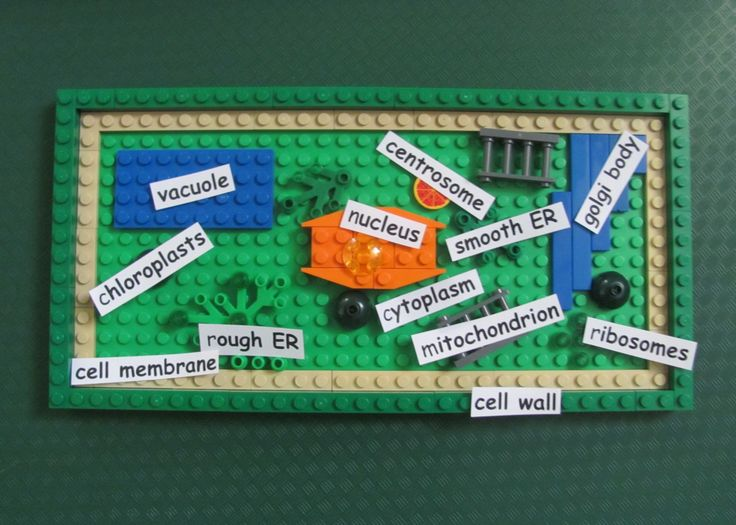 8 Best Plant Cell Model Images On Pinterest Cell Project Ideas
