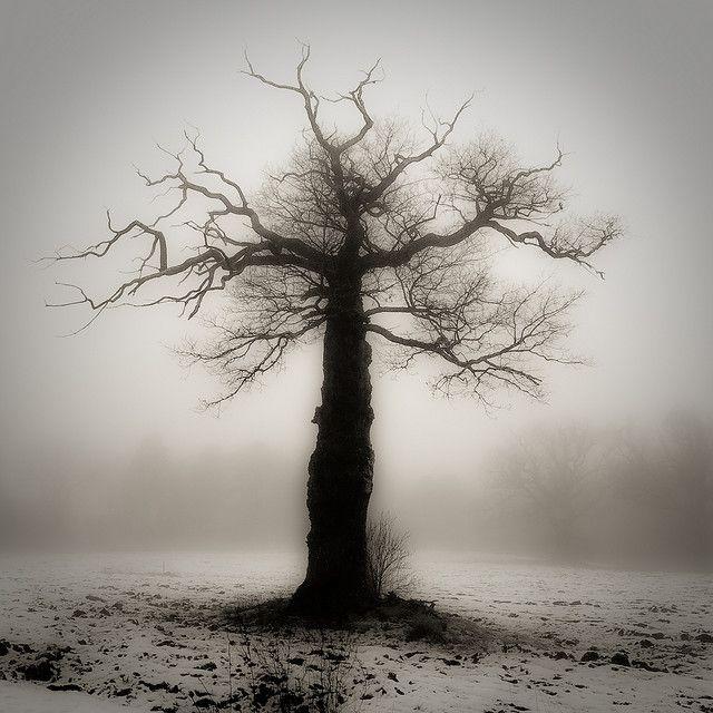 fog: Fog Photography, Royals, Art Photography, Royal Fog, Fog Tree, Nature Trees, Photography Trees