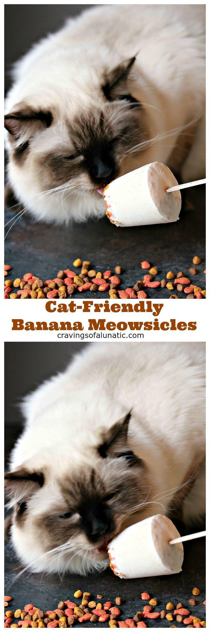 Cat-Friendly Banana Meowsicles from http://cravingsofalunatic.com- These refreshing…