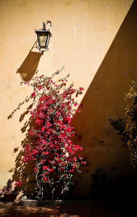 44 best images about plantas de sombra on pinterest - Plantas de sol y sombra ...