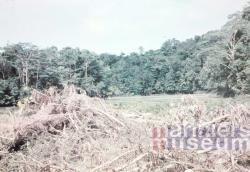 Gekapt bos aan de Digoel voor bivak Kloofkamp, 1959