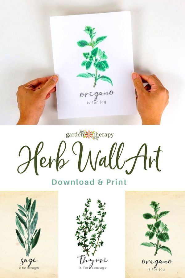 Discover The Beauty And Meaning Of Herbs With These Free Herb Printables Herb Art Herb Wall Printable Wall Art