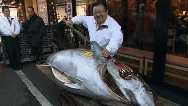 Most expensive fish to eat most expensive pinterest for Expensive fish to eat