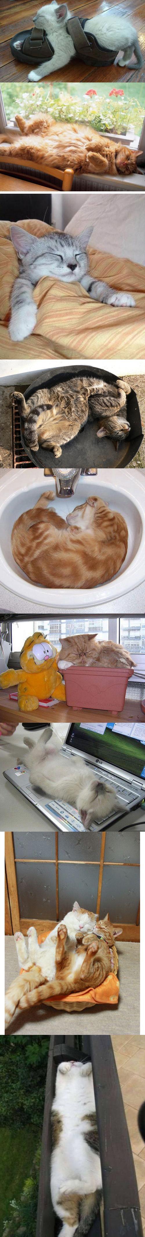Ich bin eine Katze! Ich schlafe wo und wann ich will